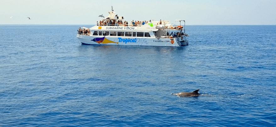 Tour um die Delfine zu sehen