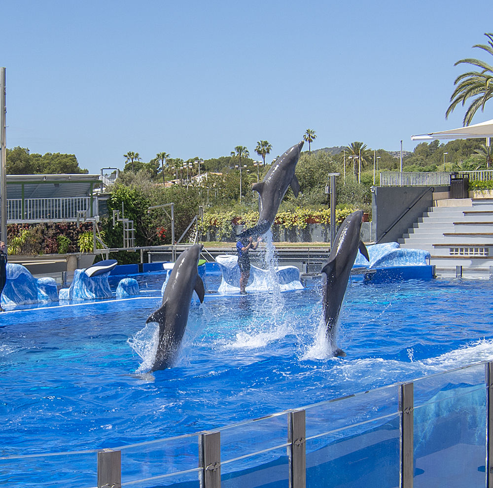 Delfine Spektakel