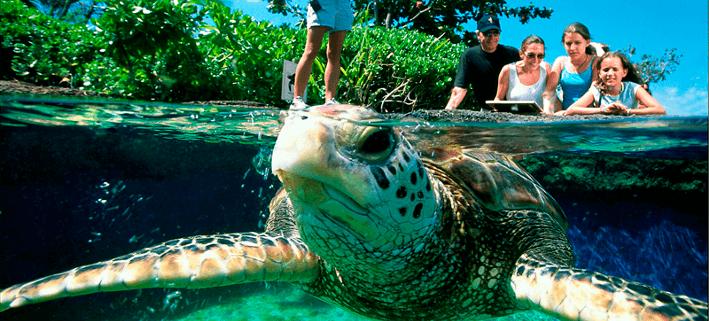 Aquarium von Mallorca
