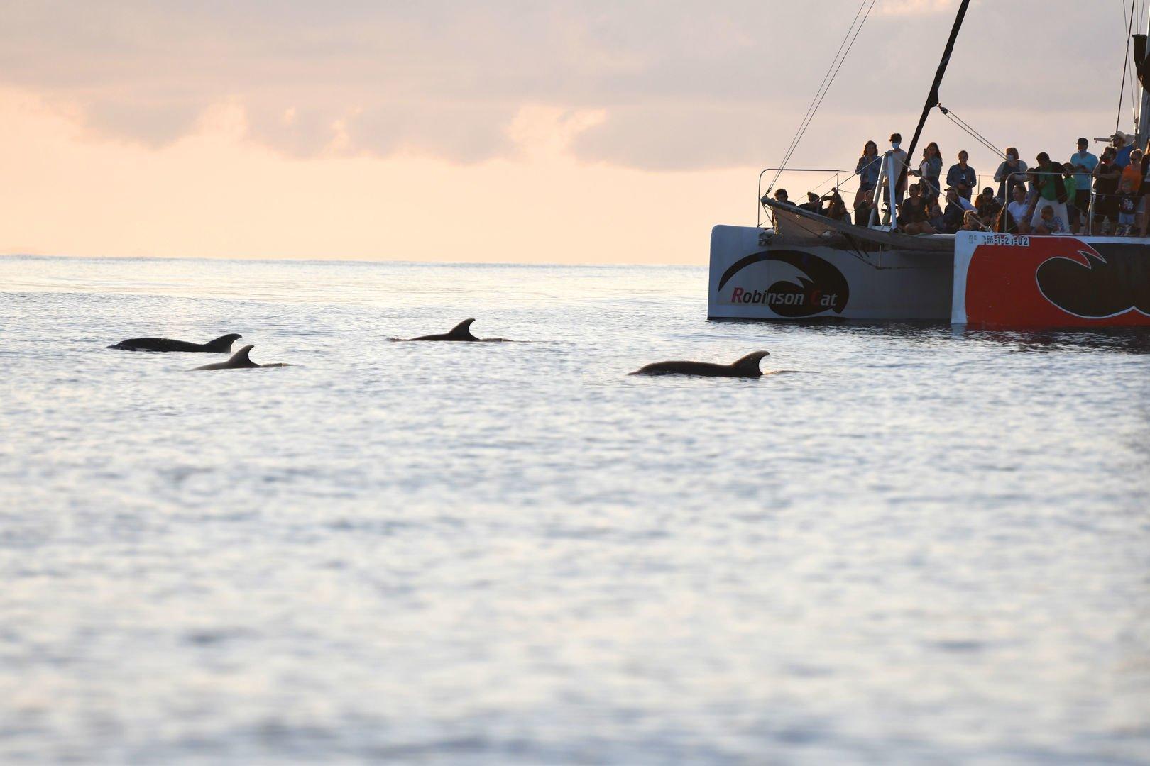 mallorca delfines