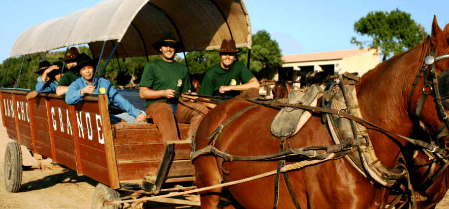 caballos, rancho, wagon