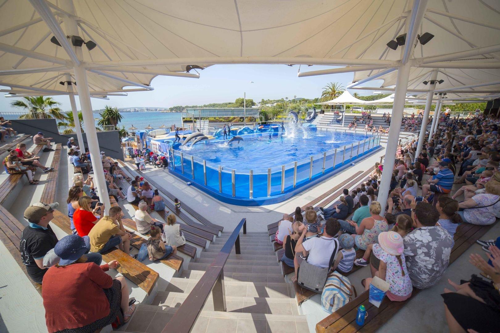 arena del show de delfines