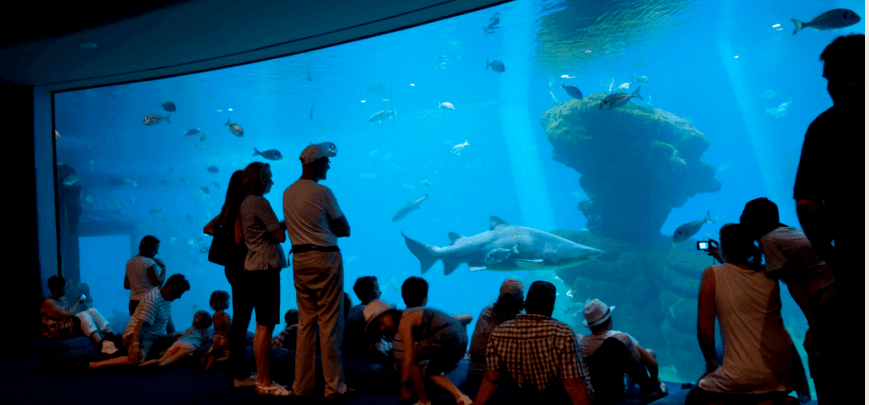Shark tank the biggest in Europe